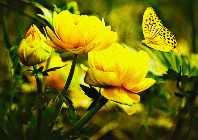 Yellow-Butterfly-and-Rose
